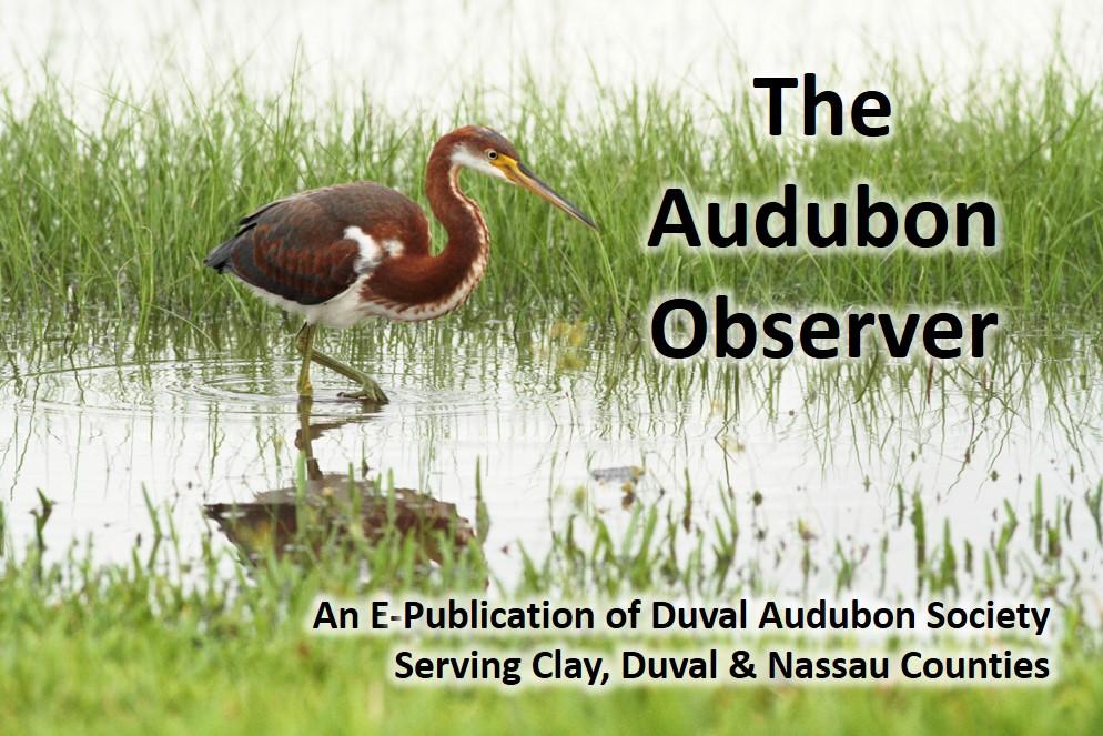 7DC 5721 Observer Banner