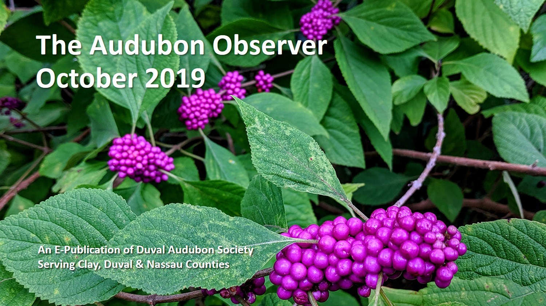 2019 Oct Observer Banner