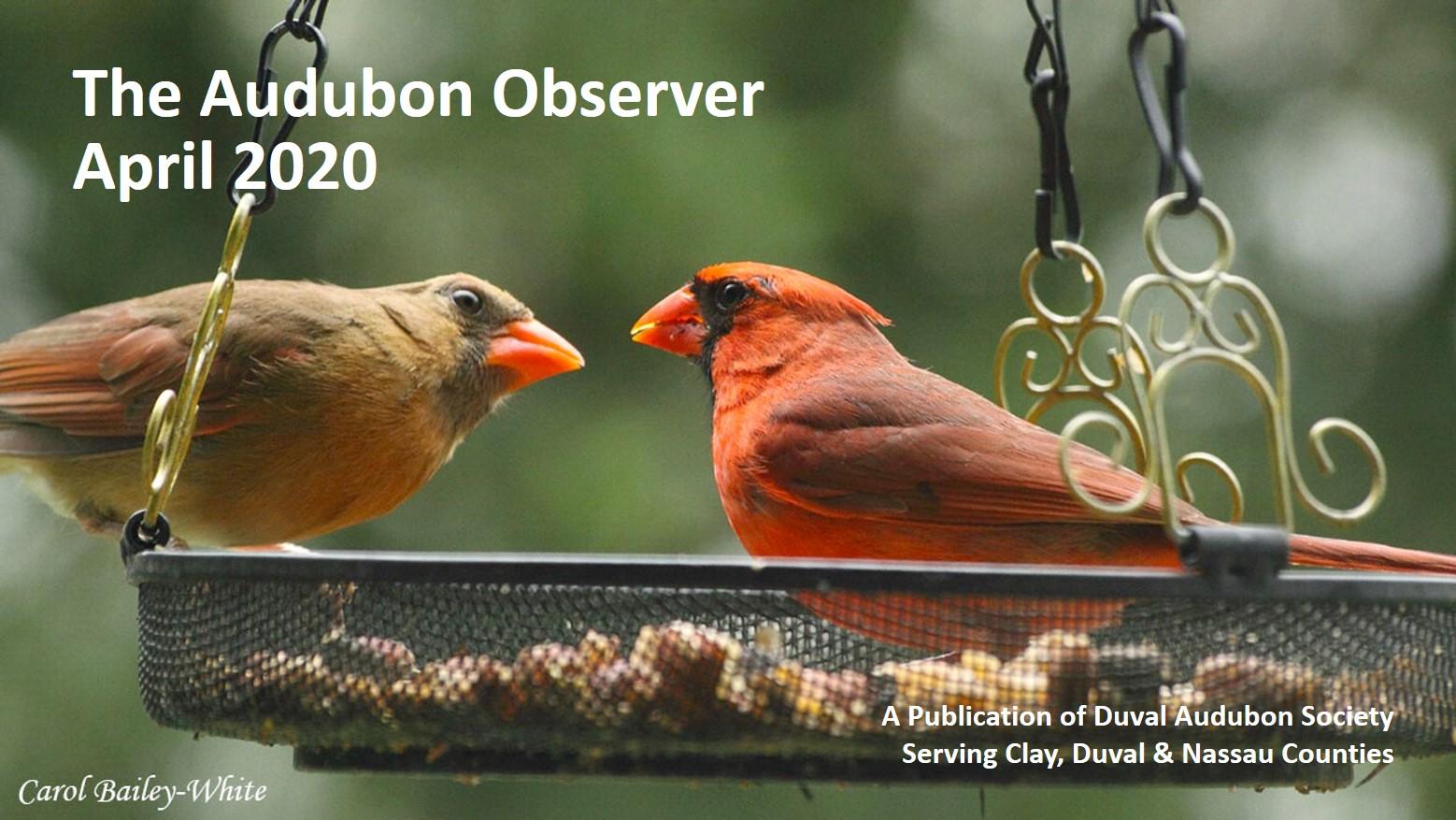 2020 April Observer Banner
