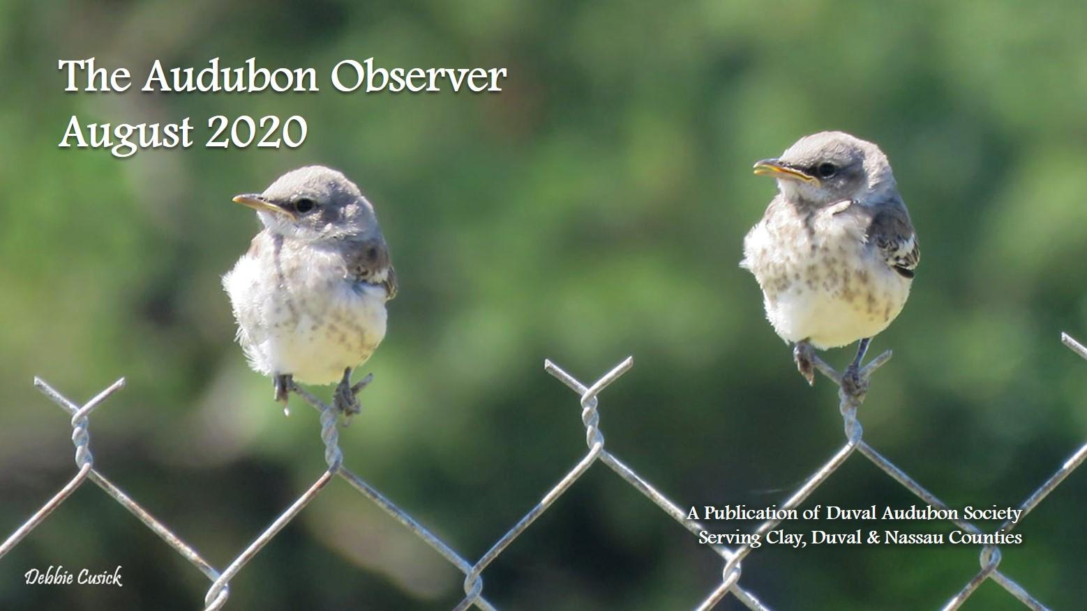 2020 Aug Observer Banner