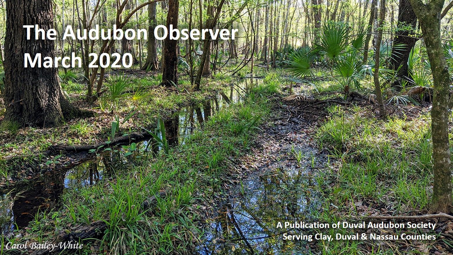 March 2020 Observer banner - Beautiful Crosby Sanctuary