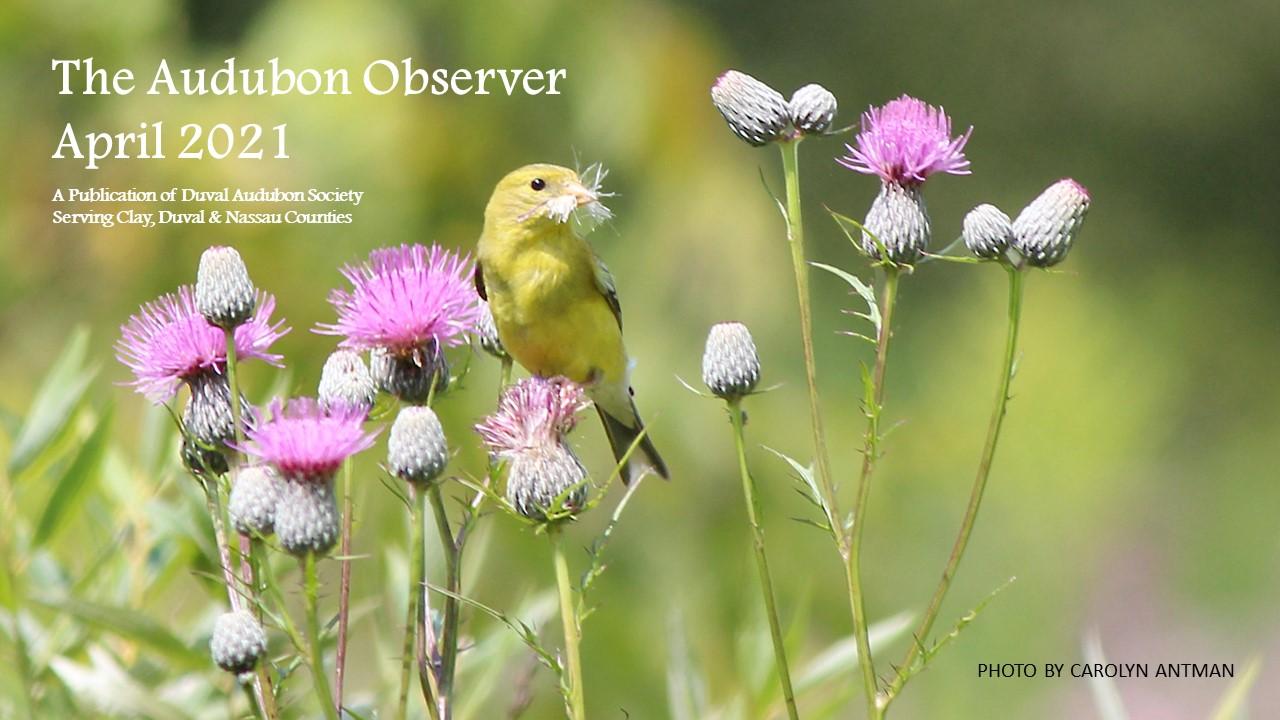 2021 Apr Observer Banner