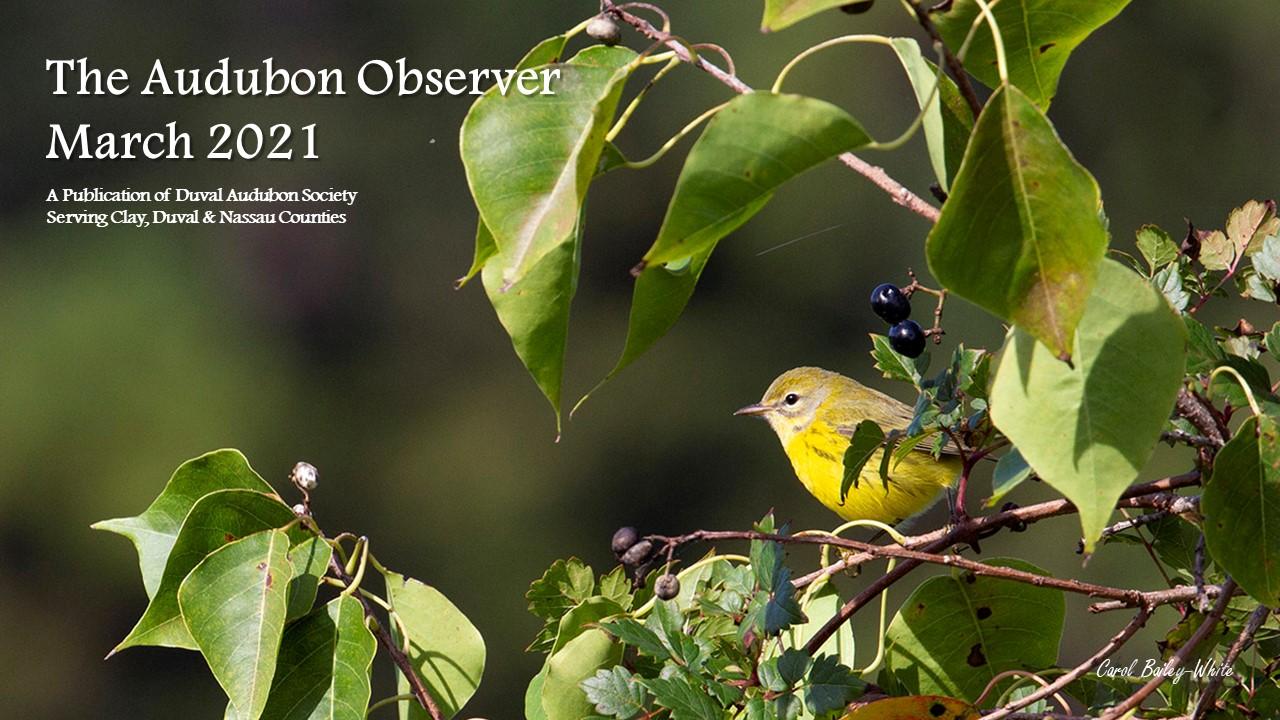 2021 March Observer Banner