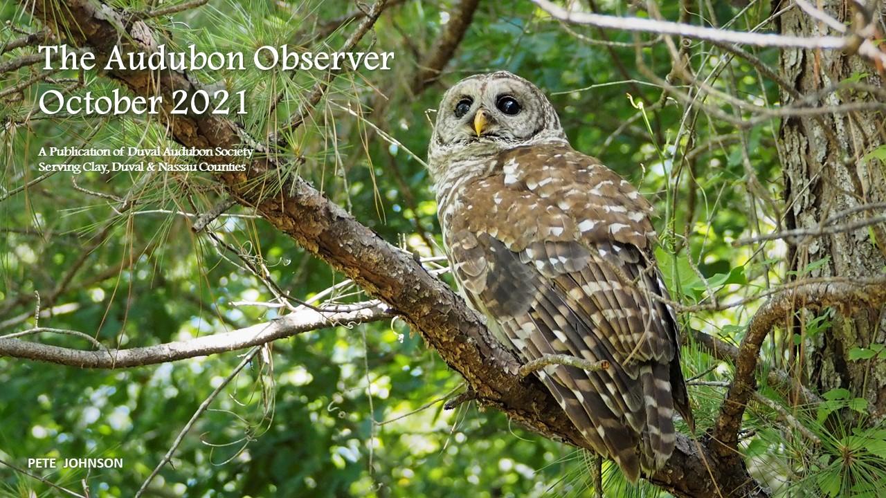 2021 Oct Observer Banner