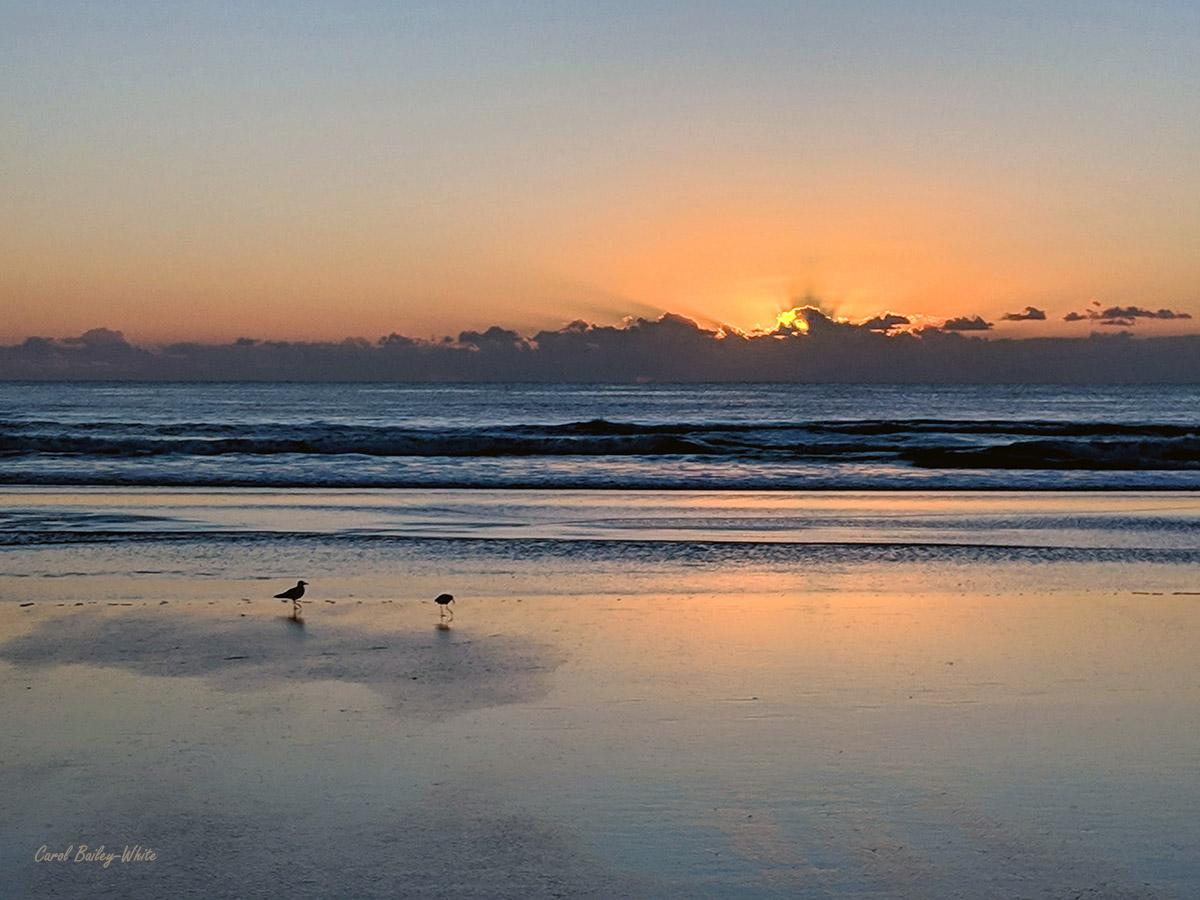 Beach sunrise with birds watermark CBW IMG 20190421 065621