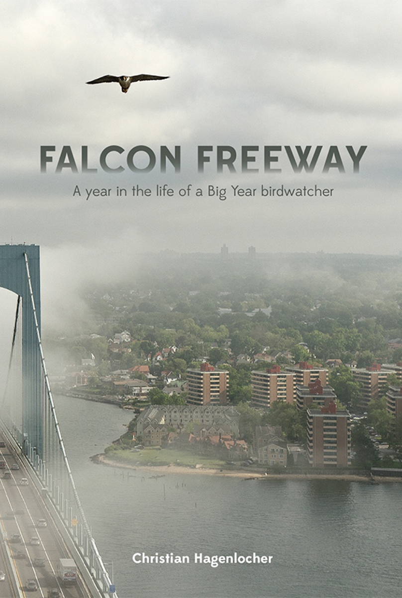 Falcon Freeway cover