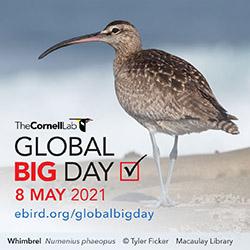 Global Big Day 2021