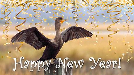 Happy New Year Cormorant 2021