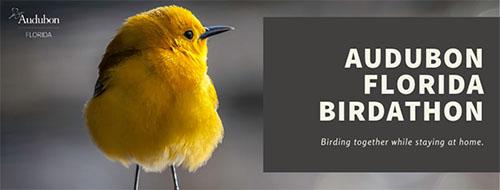 audubon florida birdathon